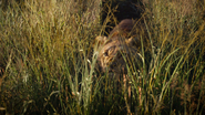 Lionking2019-animationscreencaps.com-1590