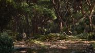 Lionking2019-animationscreencaps.com-9287
