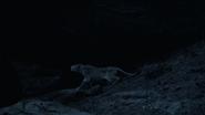 Lionking2019-animationscreencaps.com-7596