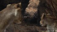 Lionking2019-animationscreencaps.com-7155