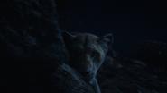 Lionking2019-animationscreencaps.com-7705