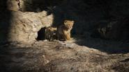 Lionking2019-animationscreencaps.com-3262
