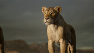 Lionking2019-animationscreencaps.com-10675