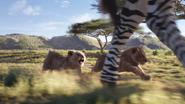Lionking2019-animationscreencaps.com-2393