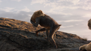 Lionking2019-animationscreencaps.com-339