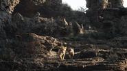 Lionking2019-animationscreencaps.com-3455