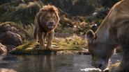 Lionking2019-animationscreencaps.com-9433