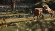 Lionking2019-animationscreencaps.com-9487