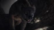 Lionking2019-animationscreencaps.com-3158