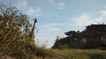 Lionking2019-animationscreencaps.com-98