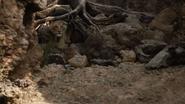 Lionking2019-animationscreencaps.com-5496