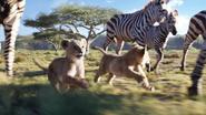 Lionking2019-animationscreencaps.com-2401