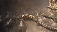 Lionking2019-animationscreencaps.com-4796