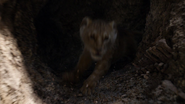 Lionking2019-animationscreencaps.com-3225