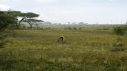 Lionking2019-animationscreencaps.com-1514