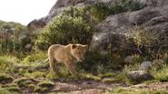 Lionking2019-animationscreencaps.com-1711