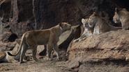 Lionking2019-animationscreencaps.com-7264