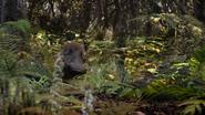 Lionking2019-animationscreencaps.com-9002