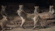 Lionking2019-animationscreencaps.com-7258