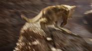 Lionking2019-animationscreencaps.com-5517
