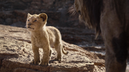 Lionking2019-animationscreencaps.com-4457