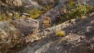 Lionking2019-animationscreencaps.com-1777