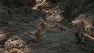 Lionking2019-animationscreencaps.com-3432
