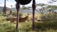 Lionking2019-animationscreencaps.com-2524