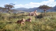 Lionking2019-animationscreencaps.com-2345