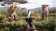 Lionking2019-animationscreencaps.com-2264
