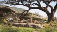 Lionking2019-animationscreencaps.com-1698