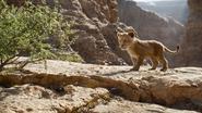 Lionking2019-animationscreencaps.com-4520