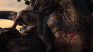 Lionking2019-animationscreencaps.com-8791