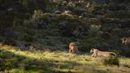 Lionking2019-animationscreencaps.com-9494