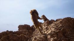 Lionking2019-animationscreencaps.com-5079