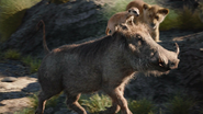 Lionking2019-animationscreencaps.com-6683