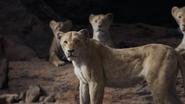 Lionking2019-animationscreencaps.com-7217
