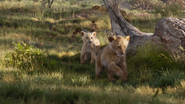 Lionking2019-animationscreencaps.com-2156