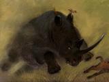 Herr Rhino