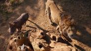 Lionking2019-animationscreencaps.com-8021