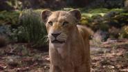 Lionking2019-animationscreencaps.com-9253
