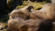 Lionking2019-animationscreencaps.com-9088