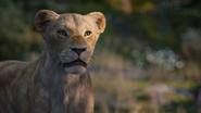 Lionking2019-animationscreencaps.com-9806
