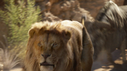 Lionking2019-animationscreencaps.com-4871