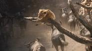 Lionking2019-animationscreencaps.com-4732