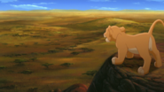 Lion-king2-disneyscreencaps-415