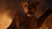 Lionking2019-animationscreencaps.com-11949