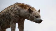 Lionking2019-animationscreencaps.com-4638