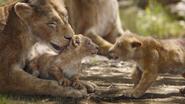 Lionking2019-animationscreencaps.com-2028