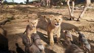 Lionking2019-animationscreencaps.com-2597